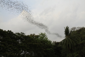 the cloud of bats