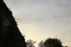 the bat cave in Battambang. every evening 4million bats stream from this cave in search of food